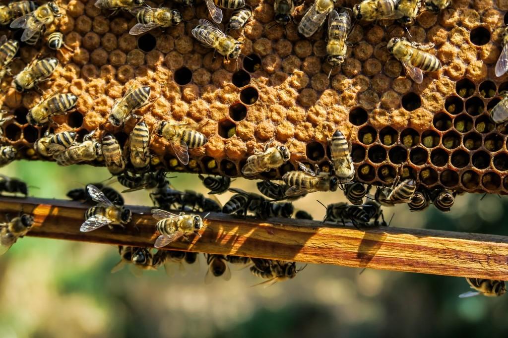 Vitaminas para el otoño: El secreto de las abejas