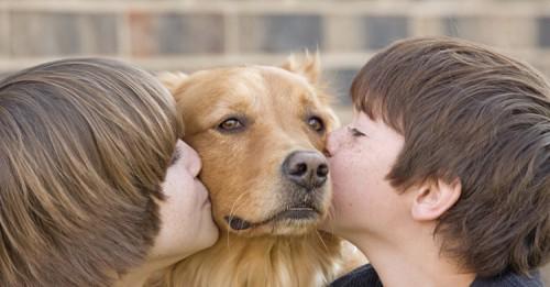 beneficios.de.tener.mascota