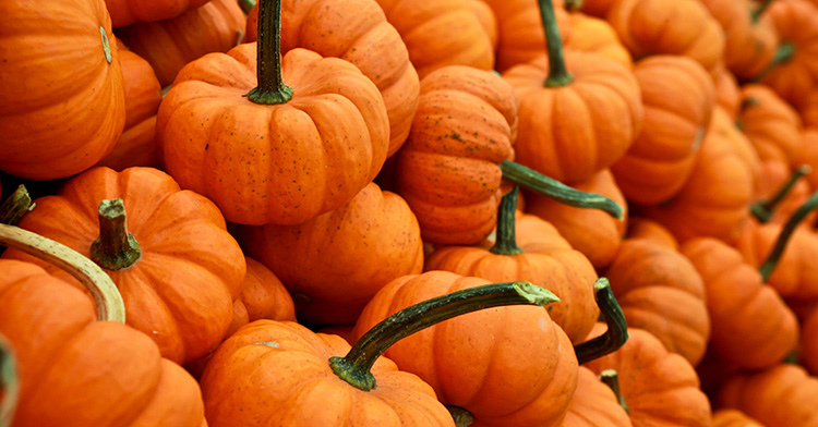 Trick or treat? Properties and benefits of pumpkins